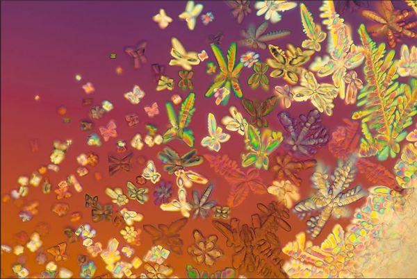 http://www.nanometer.ru/2015/04/01/biohimik_463879/PROP_IMG_images_15/preview_e1060b556a1b0122f32f849e058d72bb.jpg