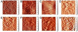 Разнообразие наноструктурированных покрытий на фасетках глаз различных групп членистоногих